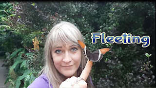 Meeting with butterflies