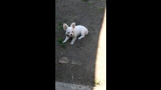 Dog Going bonkerz