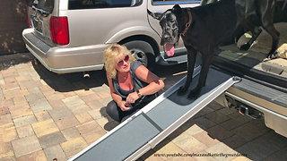 Dog teaches puppy to climb into an SUV