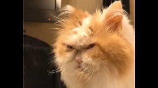 """Será este o próximo """"Grumpy Cat"""" dos EUA?"""