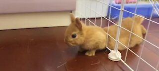 This Rabbit Escape Prison