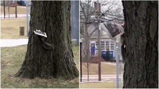 Squirrel enjoys reading the newspaper during breakfast