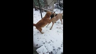 Dogs move from India to Germany, experience first ever snowfall