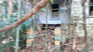 Bamboo hidden home