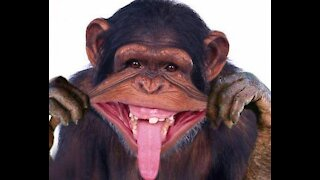 FUNNIEST MONKEY COMPILATION