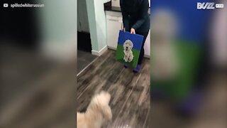 Cane spaventato a morte abbaia contro il suo ritratto!