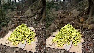 monkeys   monkey videos   amazing monkeys