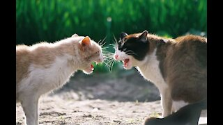 Bruce Lee Attack | Funny Cat