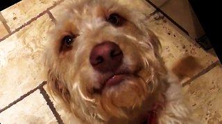 Guilty dog adorably smiles through Grandma's reprimand