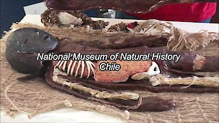 National Museum of Natural History at Quinta Normal, Chile