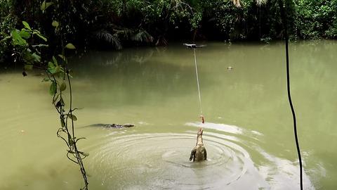 Feed lizard from drone