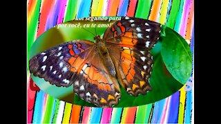 A lagarta demora um ano para transformar numa linda borboleta... Eu te amo! [Frases e Poemas]