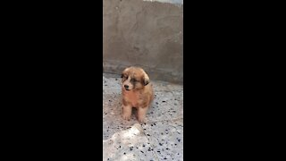 Cute puppy first time out