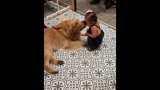Gentle pup gives toddler sweet kiss
