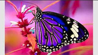 Best butterflies