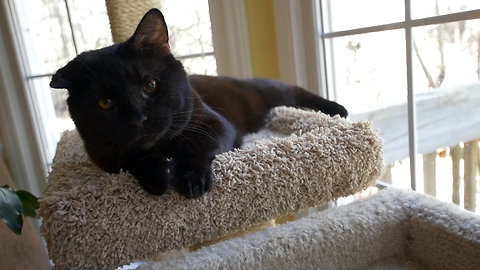 You will not believe where this beautiful black cat came from!