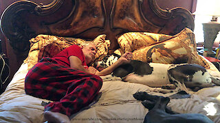 Snoring Great Danes Enjoy A Cuddle And A Nap With Their Dad