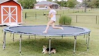 Dog chases owner under trampoline