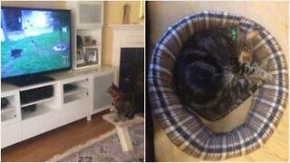 Davanti alla TV, guarda video degli amici gatti e cani!