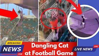 Football Fans Catch & Rescue Dangling Cat Miami Hurricanes Vs Appalachian Game at Hard Rock Stadium