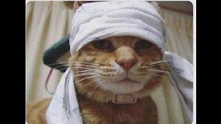 Cat 🐈 cat