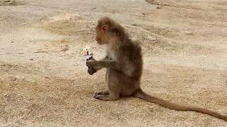 Cheeky monkey nabs ice cream