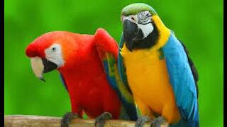 A pair of cute parrots