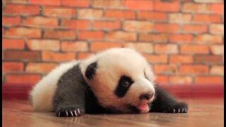 Cutest Baby Animals Compilation