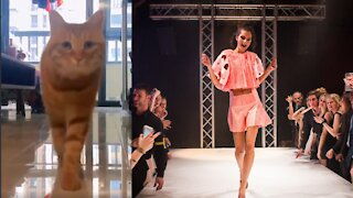 Wonderful cat walking style 2021
