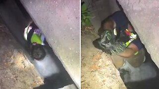 Firefighters rescue kitten from storm drain in Florida Panhandle
