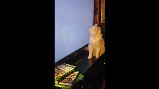 Playful cat hunts down loading circle on TV