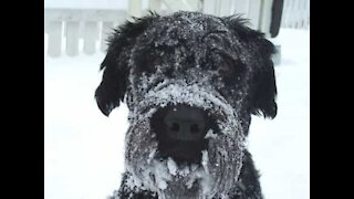 Dog sees snow for first time and loves it!