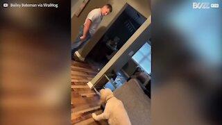 Ce chien marche au ralenti après avoir contrarié son propriétaire