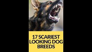 Top ten most aggressive dog breeds