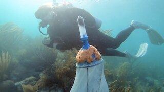 Regrowing Coral To Protect Coastlines