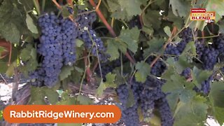 Rabbit Ridge Winery | Morning Blend