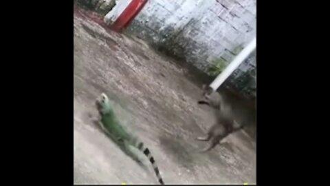Chameleon cat loses his mind