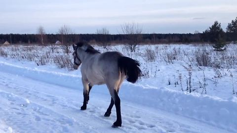 Playful horse makes it clear who her best friend is