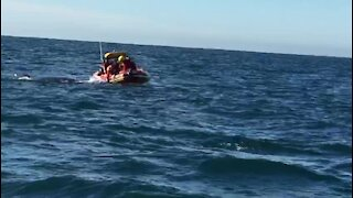 Humpback whale disentangled at Kowie River Mouth (aMv)