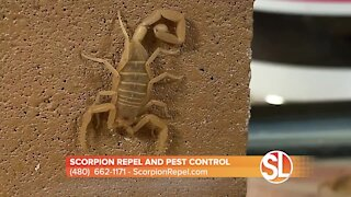 Prevent scorpions from entering your home with Scorpion Repel's Averzion