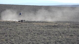 BLM rounds up wild horses because of drought and overpopulation in Oregon