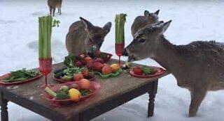 Zoo makes Christmas dinner for the deer