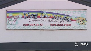 Help Wanted Wednesday: Dog in Sudz Grooming Boutique