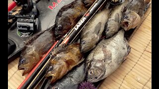 Spearfishing for Rockfish in Monterey