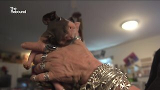 The Rebound: Sanctuary for abandoned pandemic pets