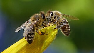 Psychic Focus on Book of the Bee