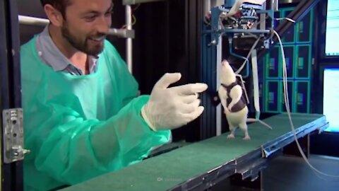 What If We Stopped Animal Testing?