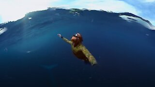 Must watch Dude diving with a blue whale