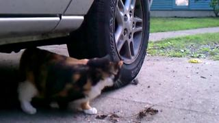A Cat Chases A Mouse Around A Car Wheel