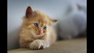 Animal Foundation seeks foster families for kittens